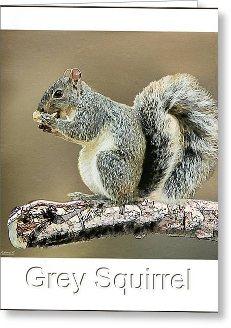 Grey Squirrel Greeting Card by Tom Schmidt