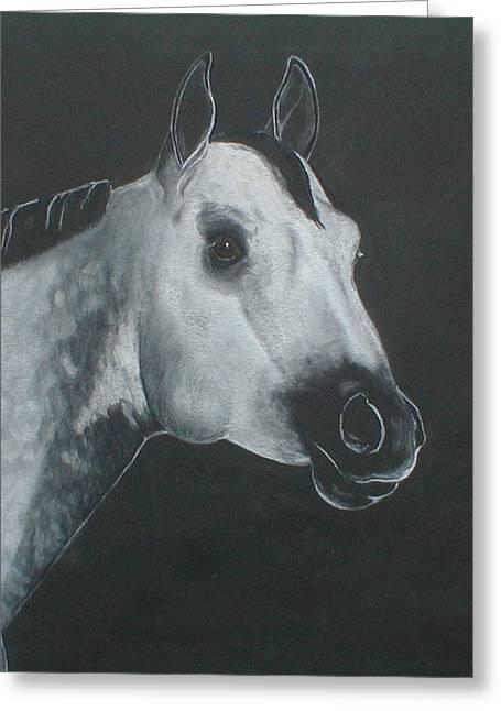 Equine Art Pastels Pastels Greeting Cards - Grey Stallion Greeting Card by Kim Garcia