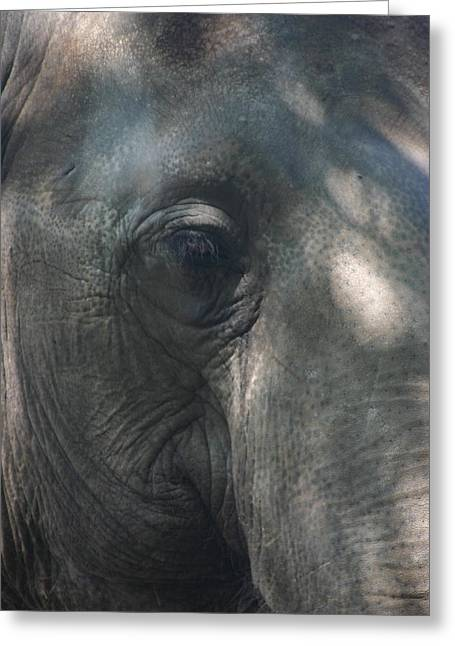 Elephants Pyrography Greeting Cards - Grey Greeting Card by Stephanie Hopkins