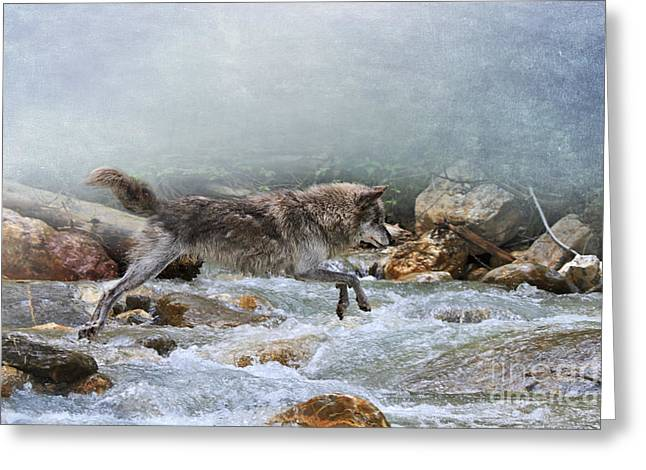 Wolf Creek Greeting Cards - Grey wolf jumping over a mountain stream Greeting Card by Louise Heusinkveld