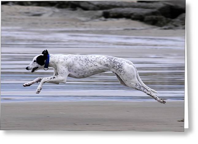 Greyhound - Flying Greeting Card by Thomas Maya