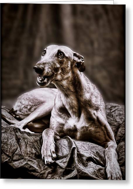 Greyhound Greeting Card by Mary Morawska