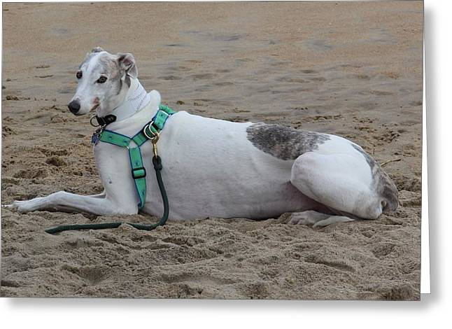 Rescued Greyhound Greeting Cards - Greyhound on the Beach Greeting Card by Jim Vansant