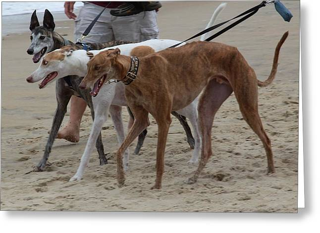 Rescued Greyhound Greeting Cards - Greyhounds on the Beach Greeting Card by Jim Vansant