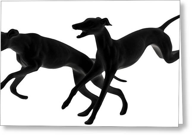 White Dog Greeting Cards - Greyhounds travelling at 45 MPH Greeting Card by Christine Till