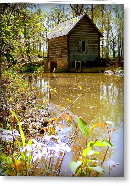 Levi Greeting Cards - Grist Mill Pond Levi Jackson Greeting Card by Cindy Wright