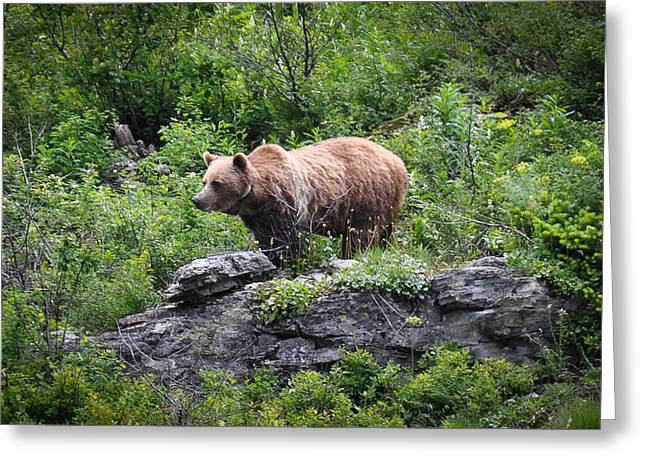 Grizzly Greeting Card by Ronda Broatch