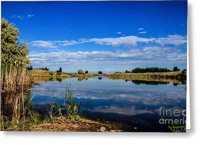 Scenic Idaho Greeting Cards - Ground Level Greeting Card by Robert Bales