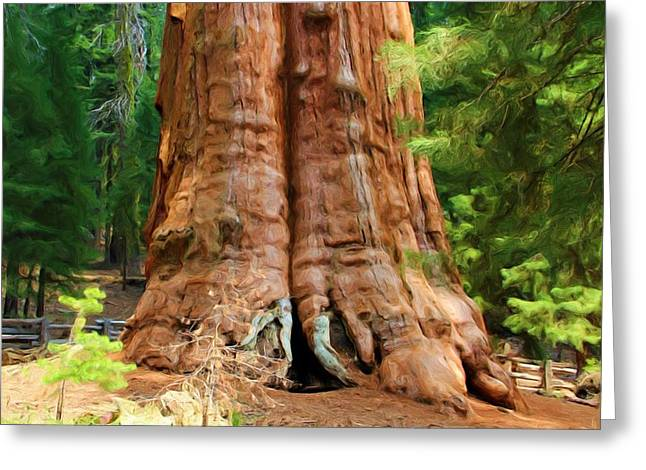 Sequoia National Park Greeting Cards - Grounded Greeting Card by Heidi Smith