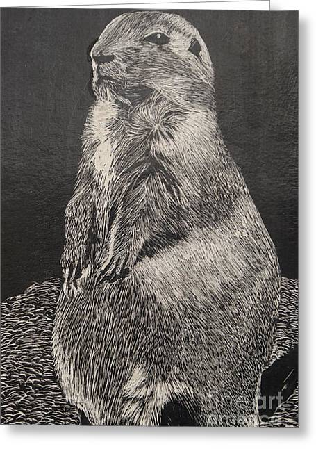 Groundhog Drawings Greeting Cards - Groundhog Greeting Card by William Ohanlan