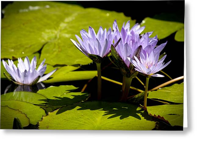 Lilly Pads Greeting Cards - Group of Lavender Lillies Greeting Card by Teresa Mucha