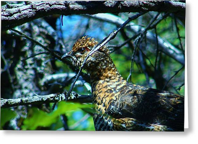 Grouse Greeting Card by Sarah Buechler