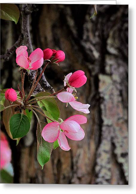 Pink Blossoms Greeting Cards - Growing In Alone Greeting Card by Andrea Arnold
