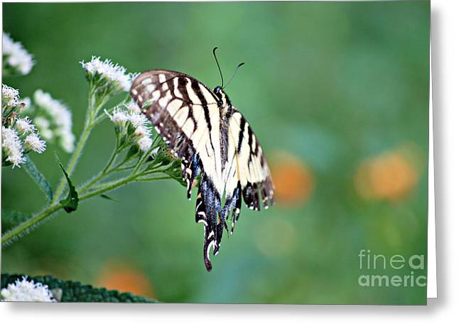 Privilege Greeting Cards - Growing Old is a Privilege Denied to many even butterflies. Greeting Card by Lila Fisher-Wenzel