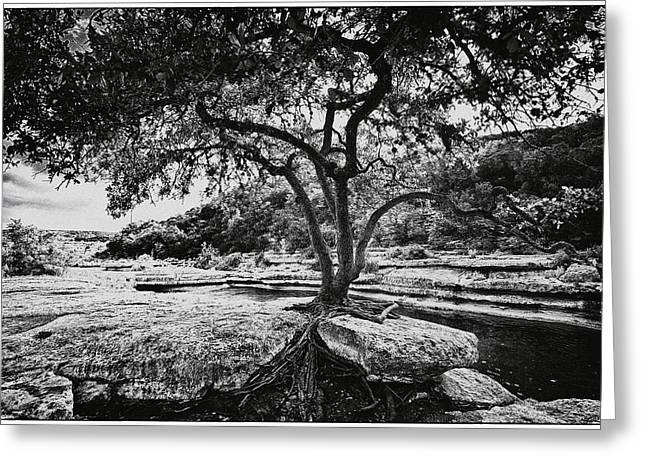 Tree In Rock Greeting Cards - Grown into the Rock Greeting Card by Lisa  Spencer