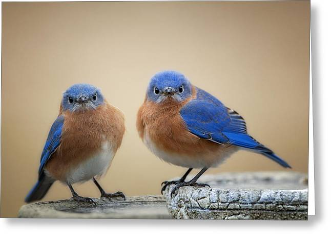 Birdbath Greeting Cards - Grumpy Little Men Greeting Card by Bonnie Barry