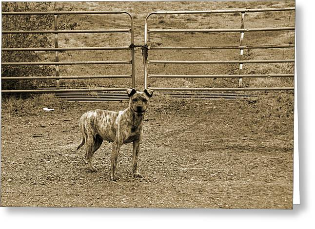 Steven Michael Photography And Art Greeting Cards - Guard Dog Greeting Card by Steven  Michael
