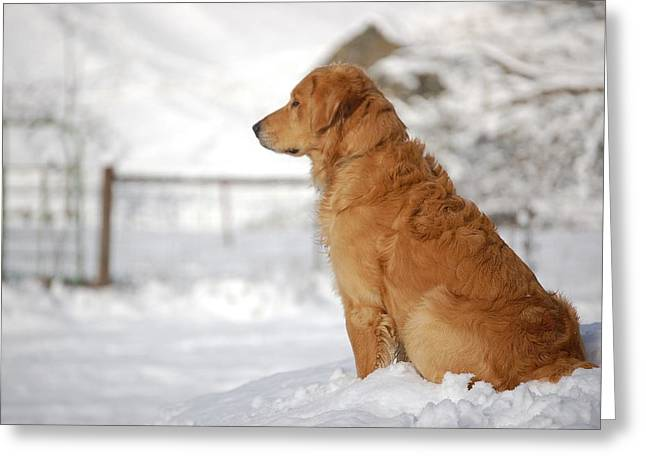 Dog In Snow Greeting Cards - Guard Greeting Card by Laura Mountainspring