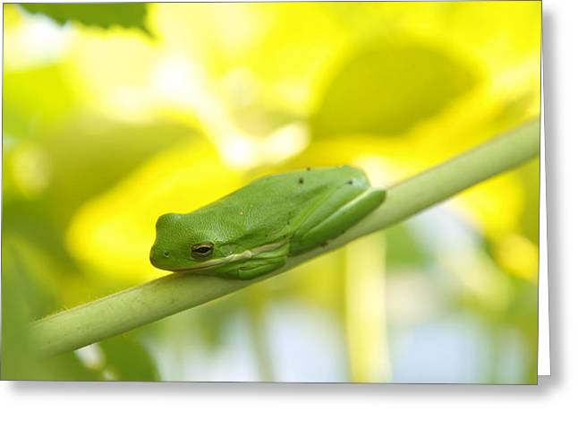 Tree Frog Greeting Cards - Guardian Frog of The Garden 1 Greeting Card by James Granberry