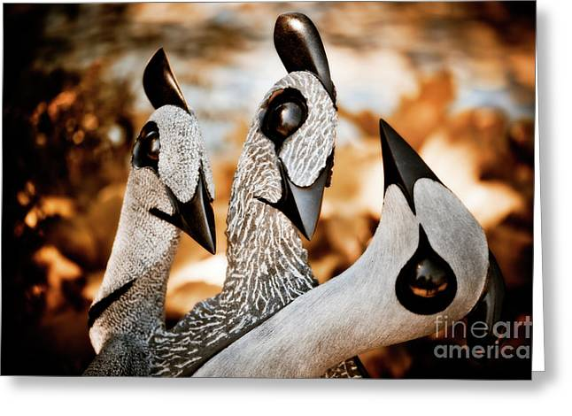 Zimbabwe Greeting Cards - Guineafowl Family Greeting Card by Venetta Archer