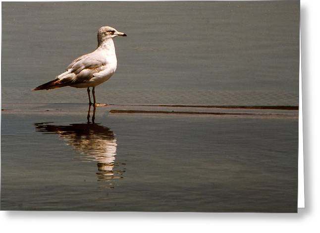 Pictur Greeting Cards - Gull Greeting Card by Bob Whitt