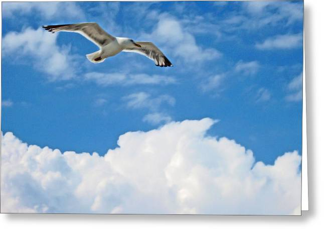 Seabirds Mixed Media Greeting Cards - Gull Greeting Card by Kevin Moore