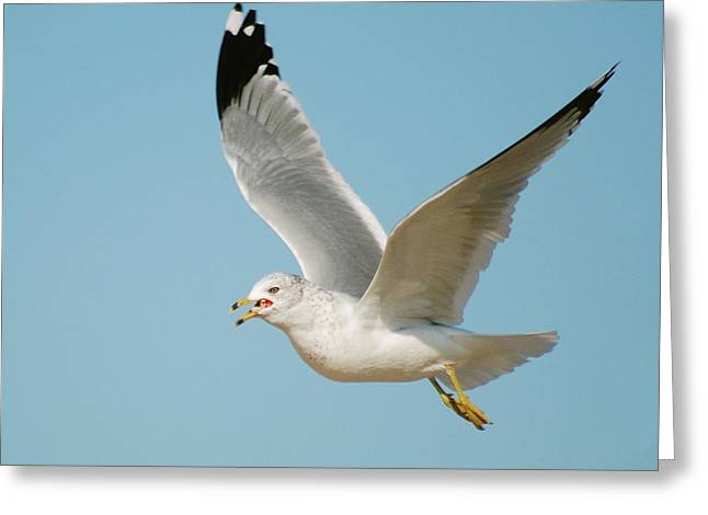Seabirds Greeting Cards - Gull Greeting Card by Michael Peychich