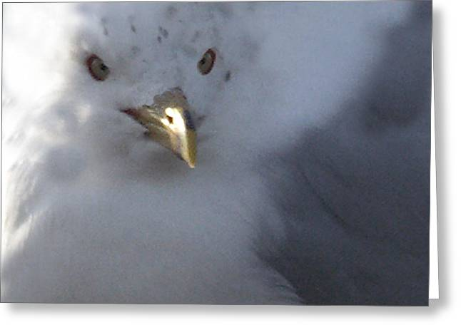 Tom Romeo Greeting Cards - Gull Greeting Card by Tom Romeo