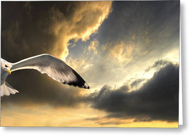 gull with approaching storm Greeting Card by Meirion Matthias