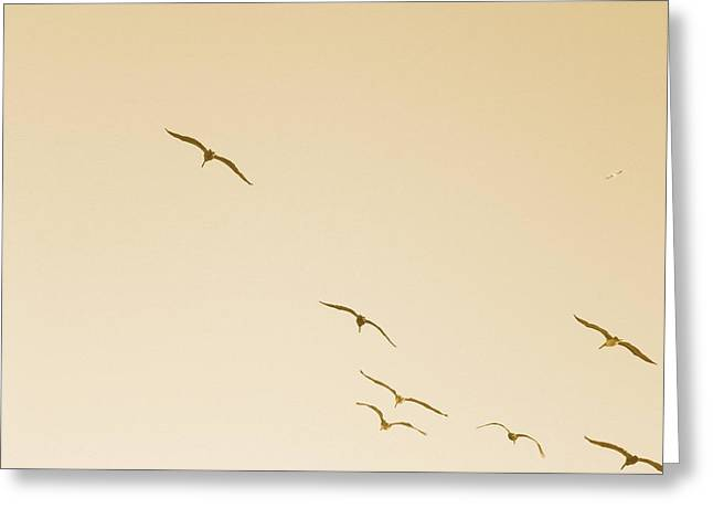Flying Seagull Greeting Cards - Gulls in Flight-Antique Greeting Card by Liz Barton-de Paul