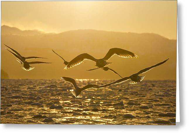 Gulls In Golden Light Greeting Card by Tim Grams