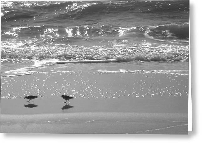 Gulls Taking a Walk Greeting Card by Cindy Lee Longhini