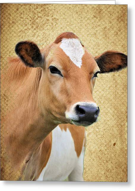 Gurney Greeting Cards - Gurnseylicious Greeting Card by Jan Amiss Photography