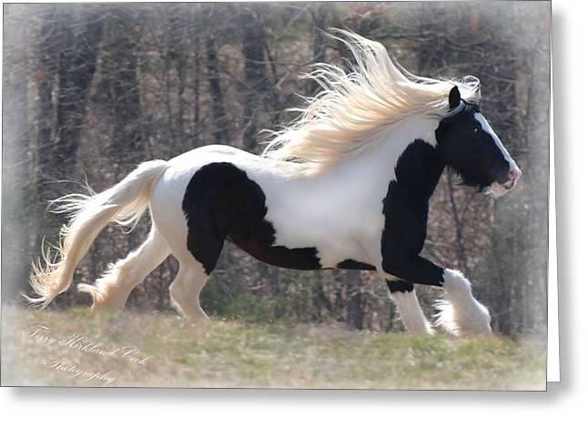 Gypsy Horse Greeting Cards - Gypsy Stallion Esperanzo Greeting Card by Terry Kirkland Cook