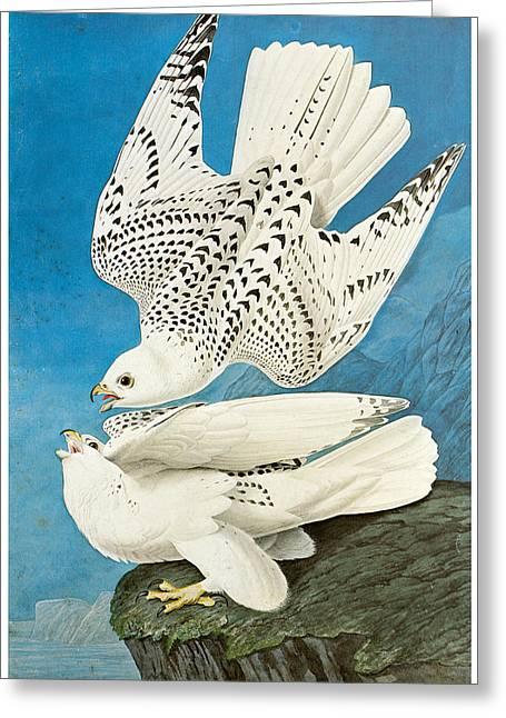Gyrfalcon Greeting Card by John James Audubon