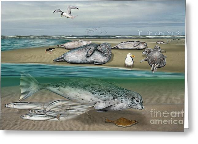 Underwater Diva Drawings Greeting Cards - Habitat common seals  - Pinnipeds - Marine Mammals - mudflat tideland - Phoque commun-Banc de Sable  Greeting Card by Urft Valley Art