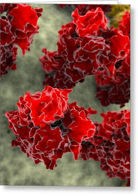 Haemagglutinin Greeting Cards - Haemagglutinin Flu Proteins, Artwork Greeting Card by Ramon Andrade 3dciencia