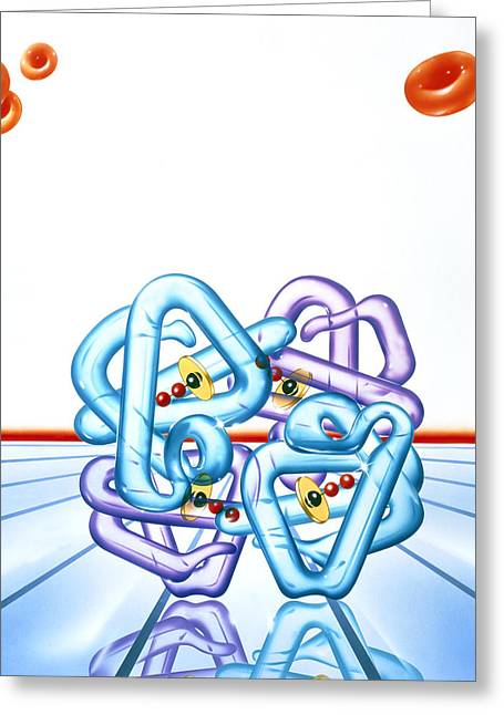 Polypeptide Greeting Cards - Haemoglobin Molecule Greeting Card by John Bavosi