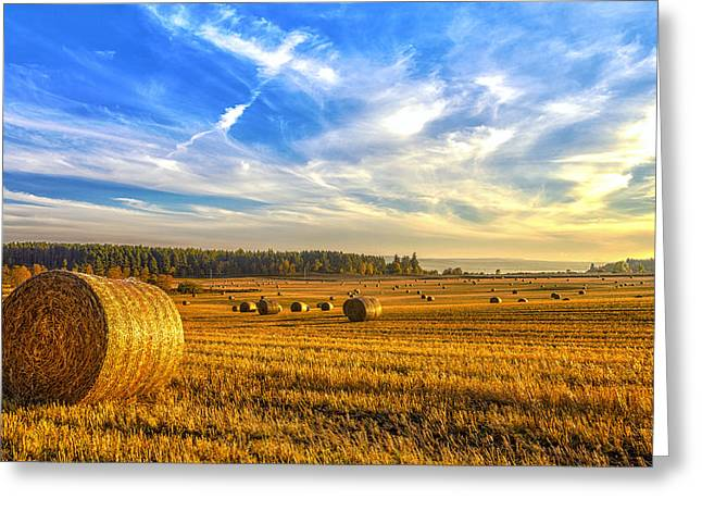 Wheat Field Sky Pictures Greeting Cards - Halcyon Harvest Days Greeting Card by Derek Beattie