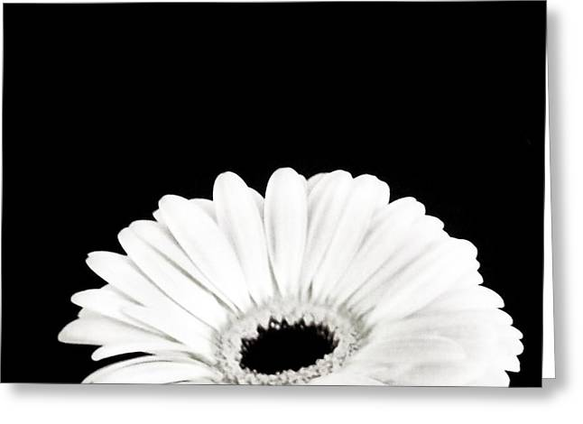 Floral Digital Art Digital Art Greeting Cards - Half Moon Daisy Greeting Card by Marsha Heiken