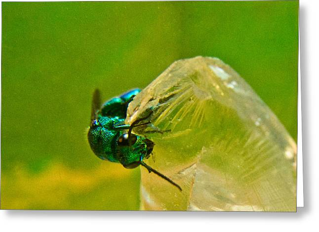 Irridescent Greeting Cards - Halicid Wasp 1 Greeting Card by Douglas Barnett