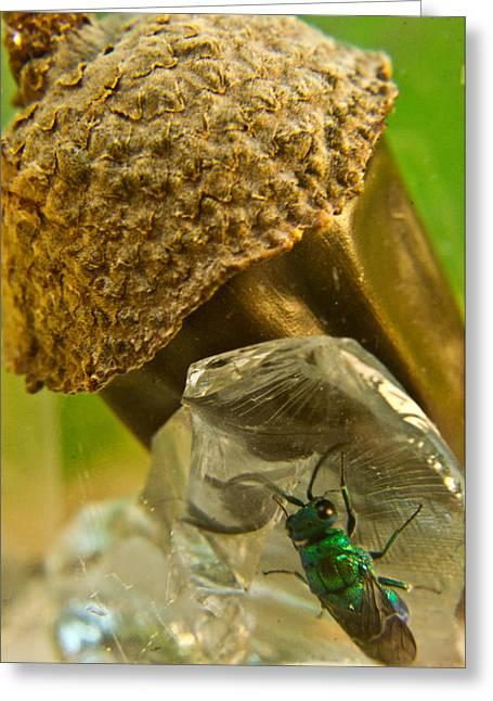 Irridescent Greeting Cards - Halicid Wasp 5 Greeting Card by Douglas Barnett