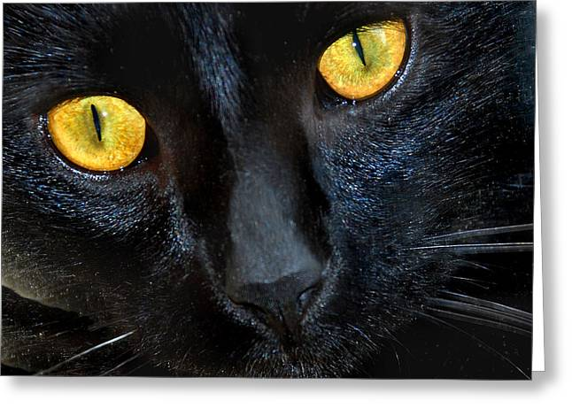 Pictures Of Cats Greeting Cards - Halloween Cat Greeting Card by Skip Willits