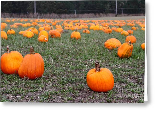 Halfmoon Bay Greeting Cards - Halloween Pumpkin Patch 7D8383 Greeting Card by Wingsdomain Art and Photography