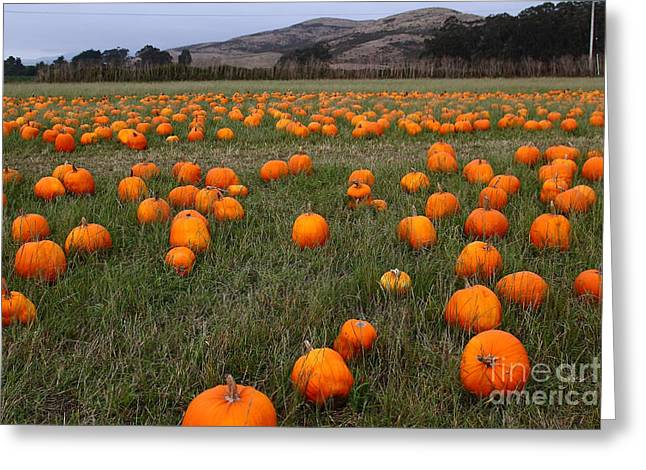 Best Sellers -  - Half Moon Bay Greeting Cards - Halloween Pumpkin Patch 7D8388 Greeting Card by Wingsdomain Art and Photography