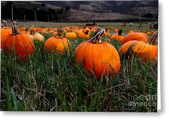 Melon Greeting Cards - Halloween Pumpkin Patch 7D8405 Greeting Card by Wingsdomain Art and Photography