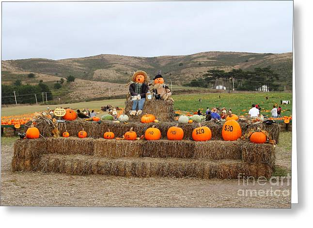 Melon Greeting Cards - Halloween Pumpkin Patch 7D8478 Greeting Card by Wingsdomain Art and Photography