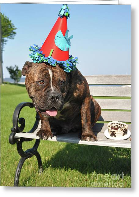 Hammer's 1st Birthday Greeting Card by Tommy  Urbans