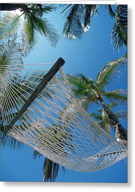 Hammock And Palm Tree, Great Barrier Greeting Card by Ron Watts