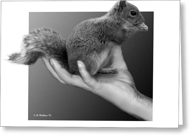 Sfx Greeting Cards - Hand Full of Squirrel Greeting Card by Brian Wallace